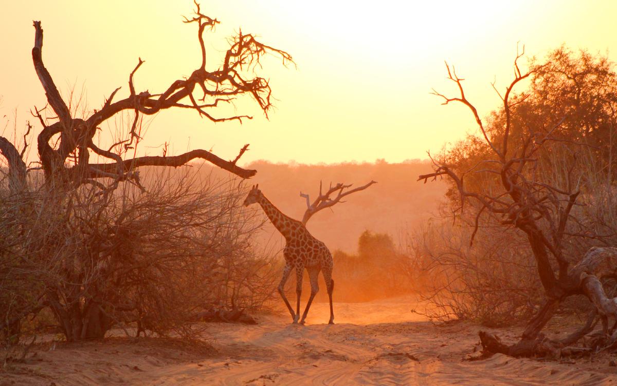 Homepage_Photog_1200x752_Africa2.jpg