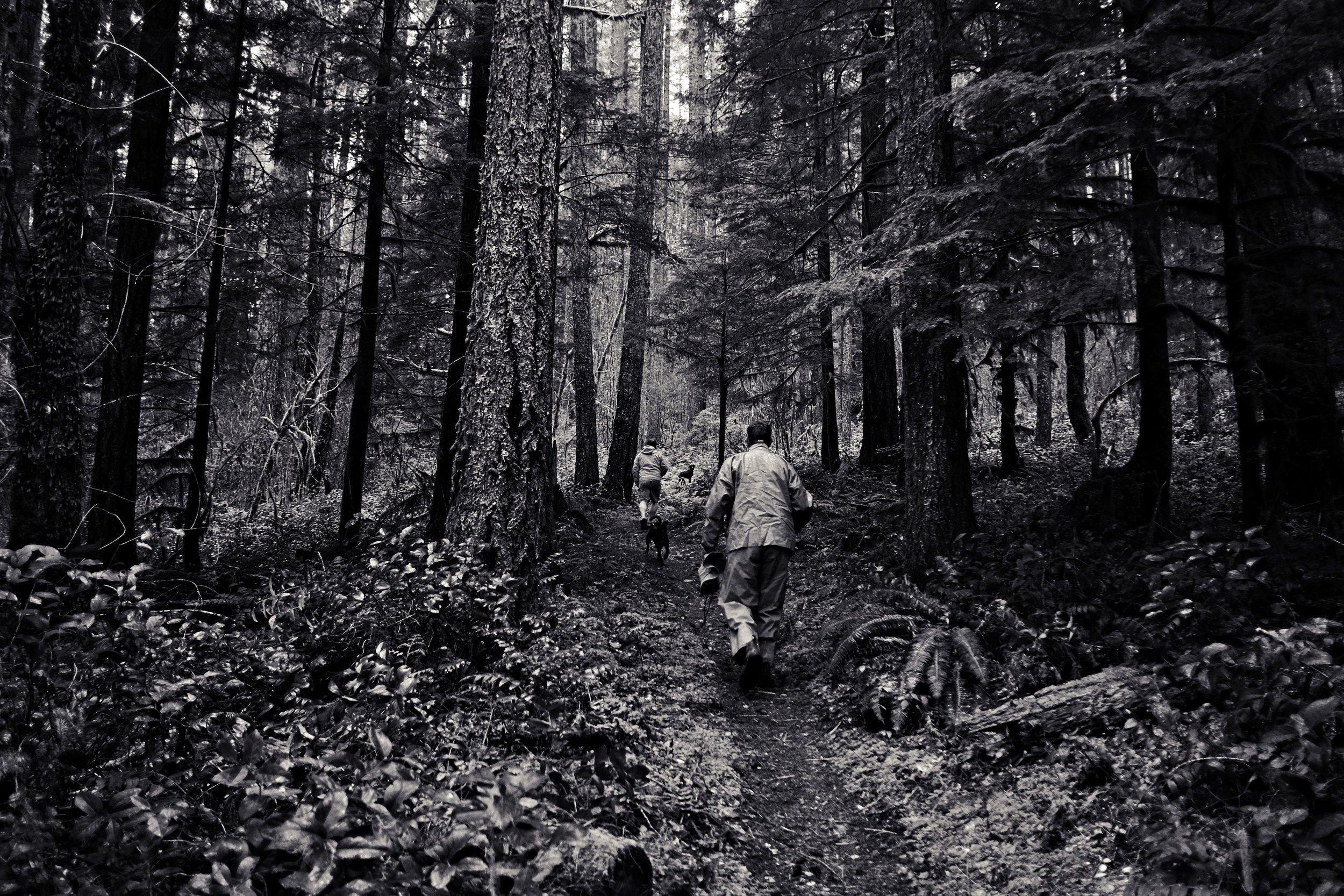 forest walk 4.jpg