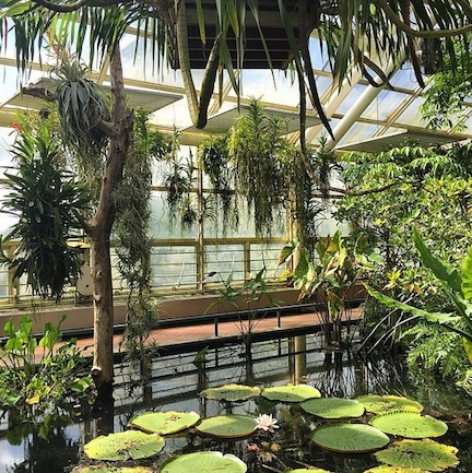 Tropical plants in the Botanic Garden