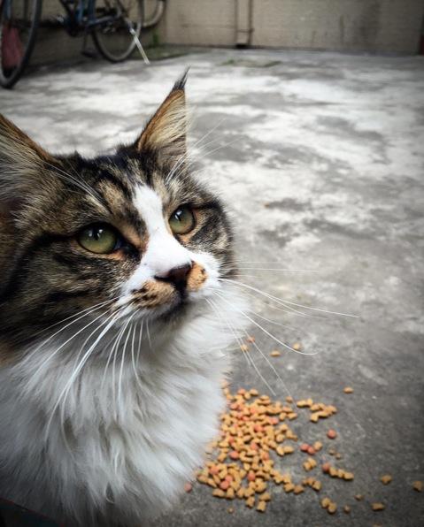 Cat sighting. Image via  @lweatherbee