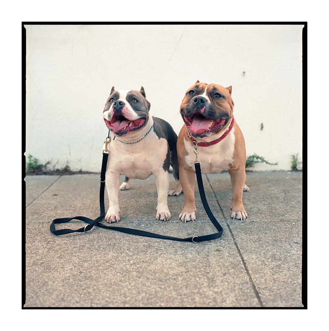 Theo & Leon