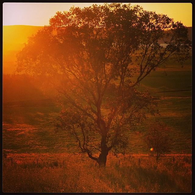 Golden morning glow over Bendick Murrell