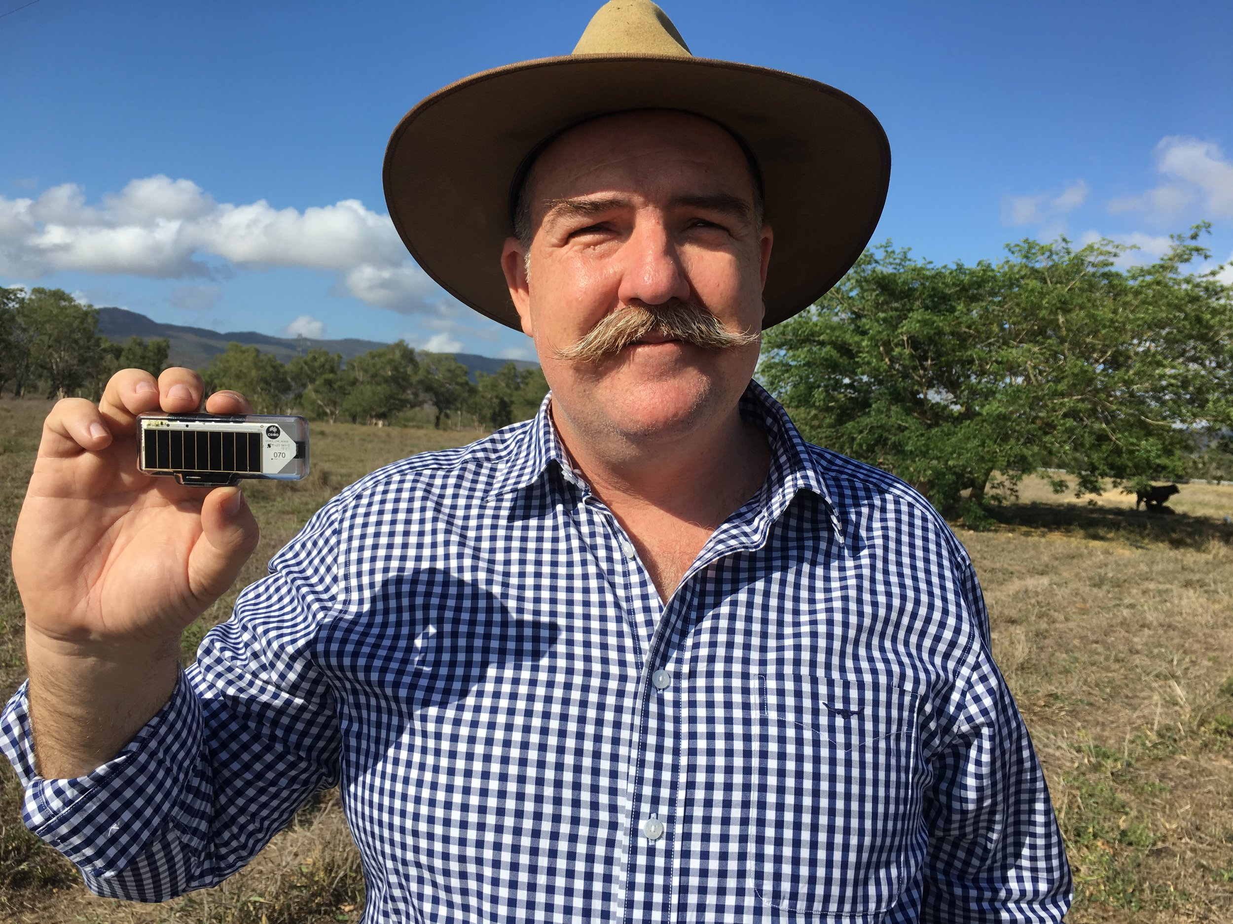 Ceres Tag CEO, David Smith onsite at CSIRO Research Cattle Station with next gen smart tag.