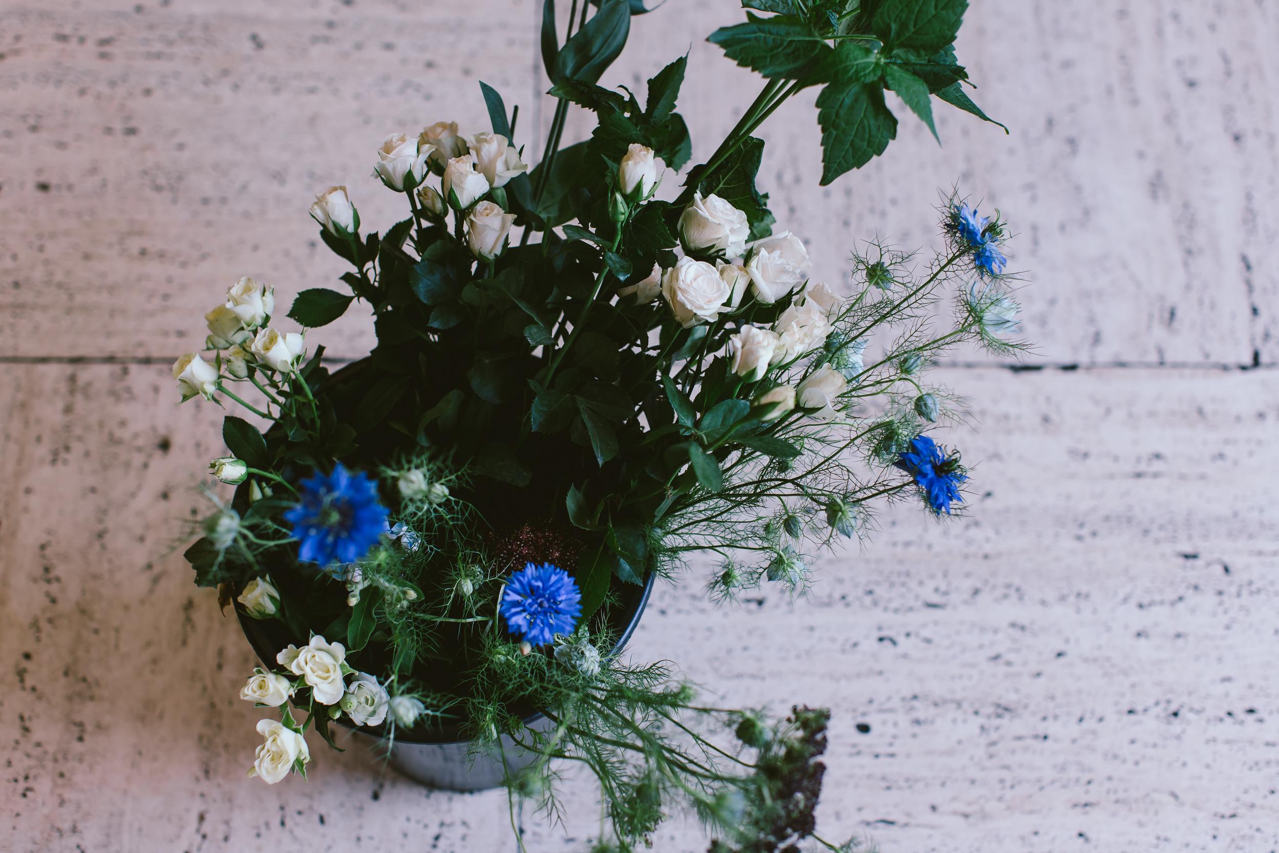 Bloom 050.jpg