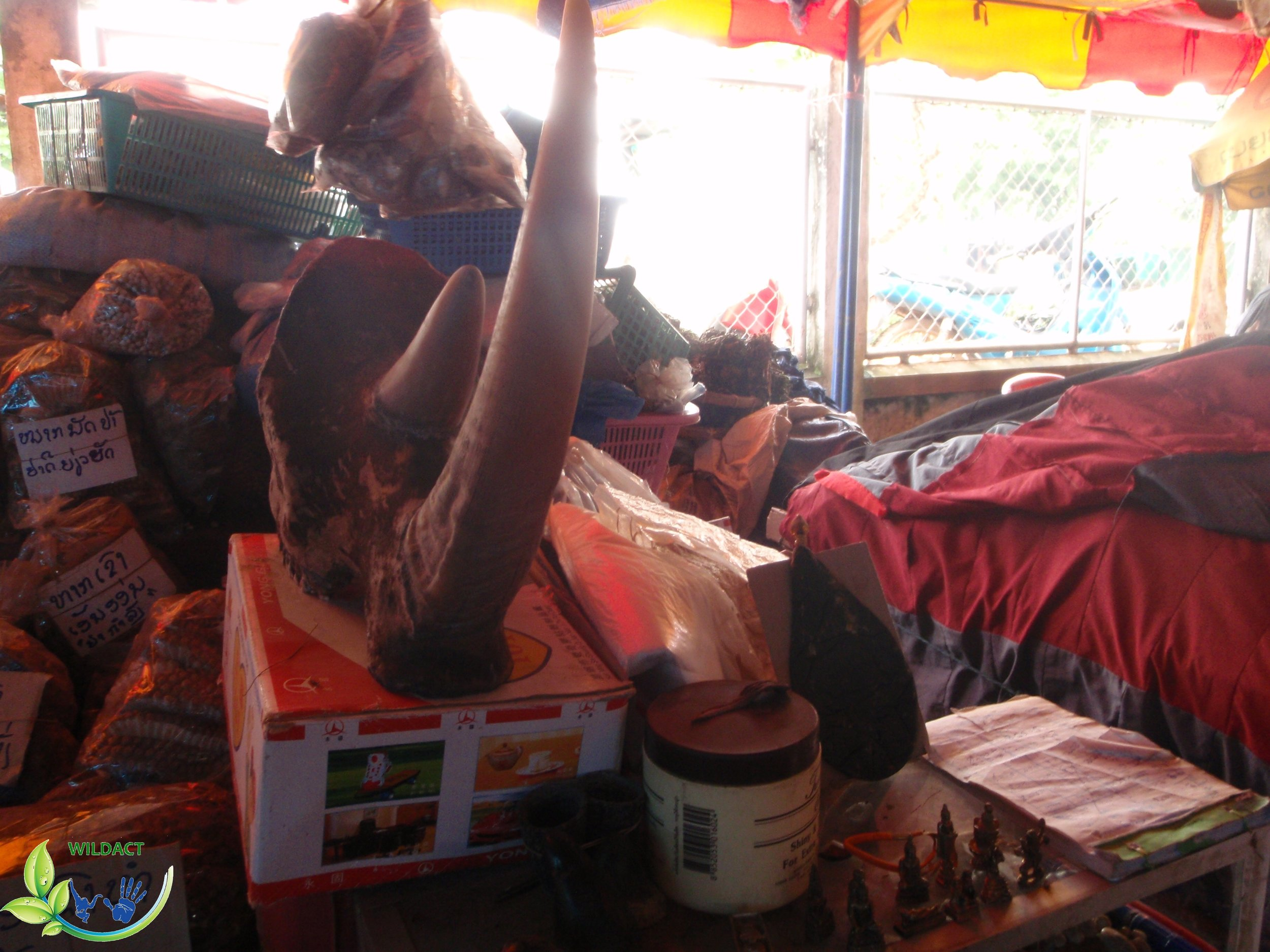 Fake rhino horns and bear gall-bladder for sale in Laos - WildAct