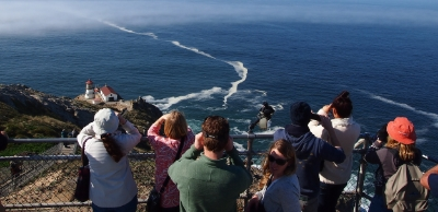 Whale watchers above Point Reyes Lighthouse.