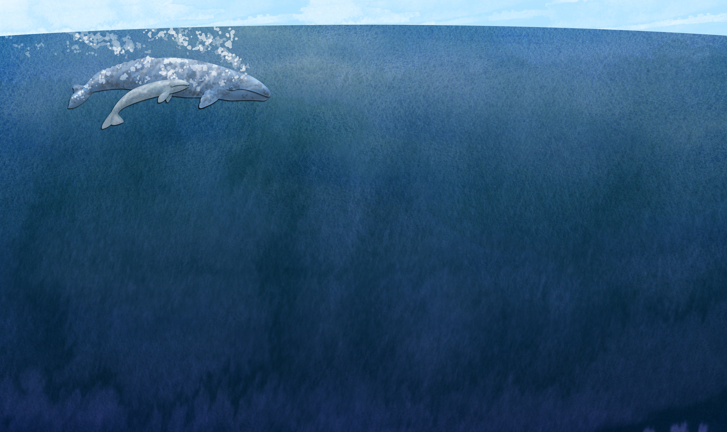 An illustration from  Little Gray's Great Migration. The Eastern Pacific gray whale migrates more than 10,000 miles each year.