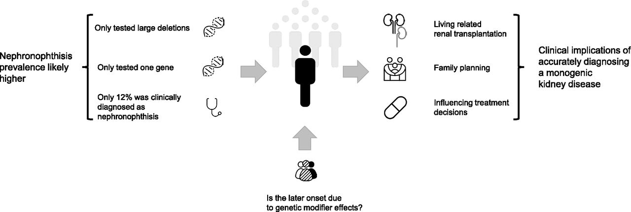 Figure 4 from Skoen et al. Authors conclusions: At least one in 200 (0.5%) patients has adult-onset ESKD due to nephronophthisis. The late presentation of nephronophthisis might be due to genetic modifier effects. Accurately diagnosing a monogenic disease such as nephronophthisis can have wide-ranging clinical implications.