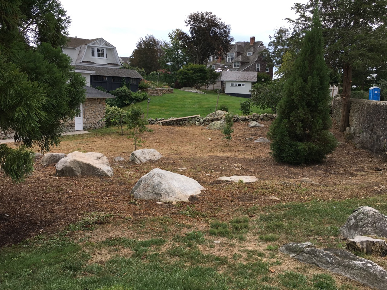 Side lawn of the library cleared of weeds and bramble, September 3rd