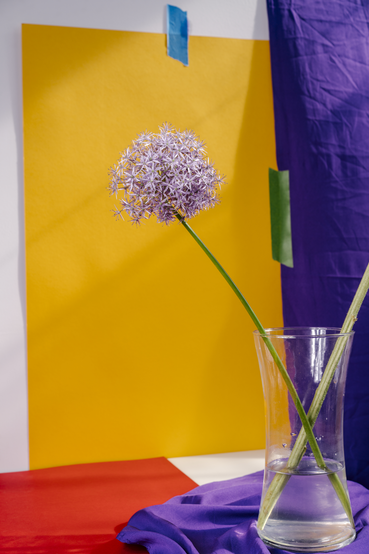 Untitled (Allium)