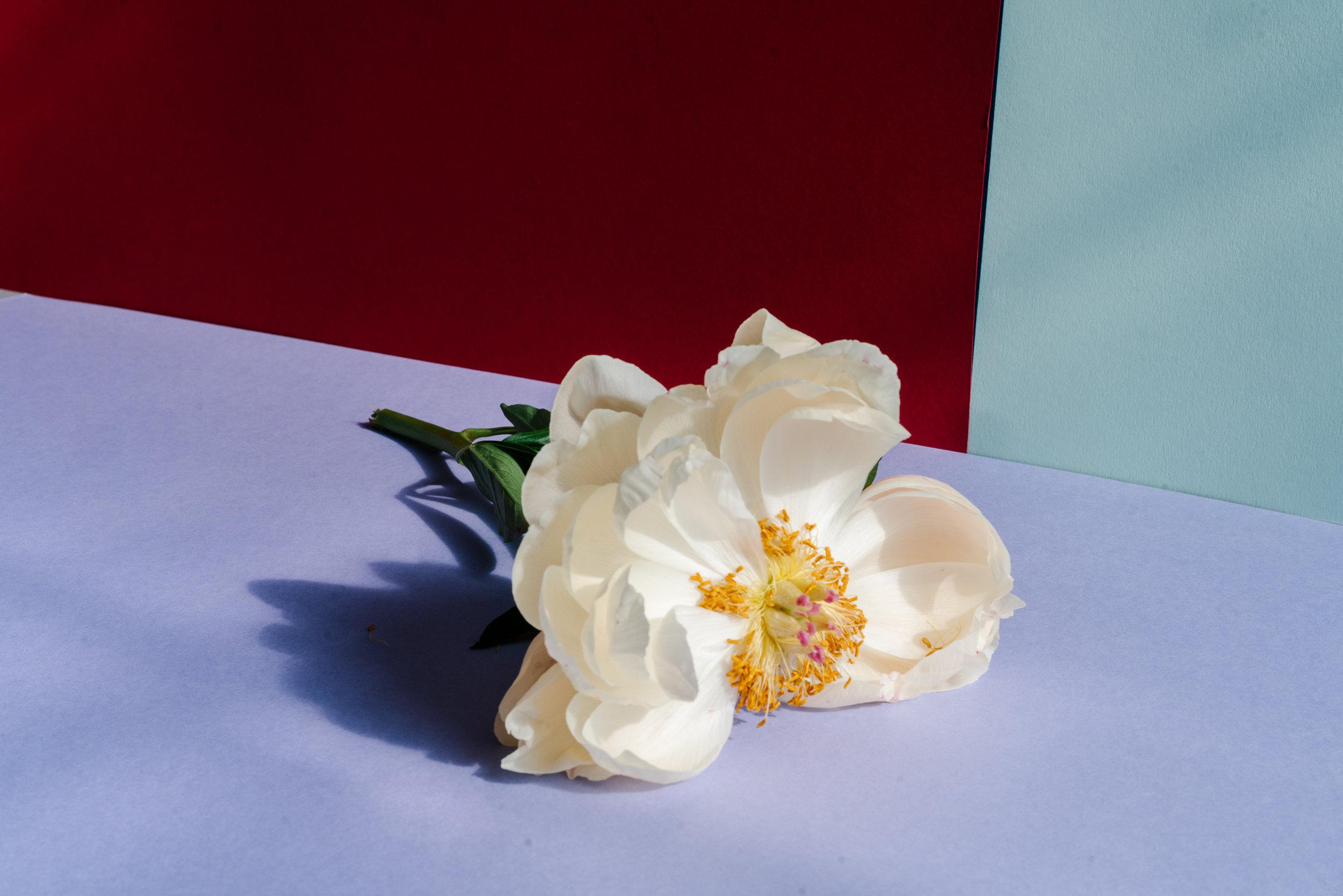 Flowers-02066.jpg