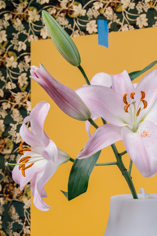 Flowers-03216.jpg