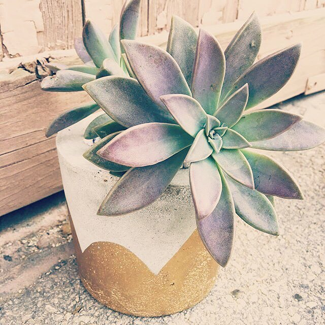 So excited to have these little beauties from @cactus.makes.perfect at Roots soon! #succulentsofinstagram #spring #buylocal #handmade