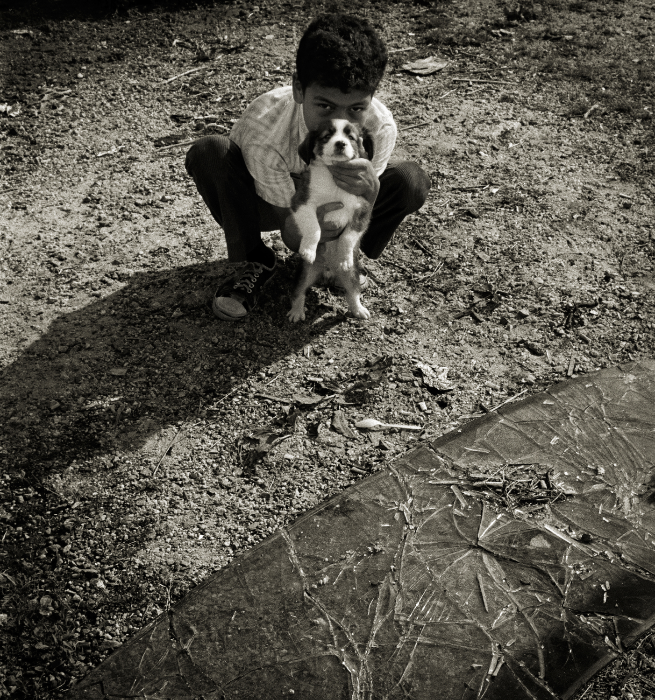boy dog