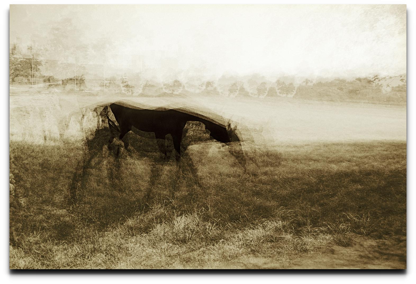 horse202_16largeDrum3.jpg