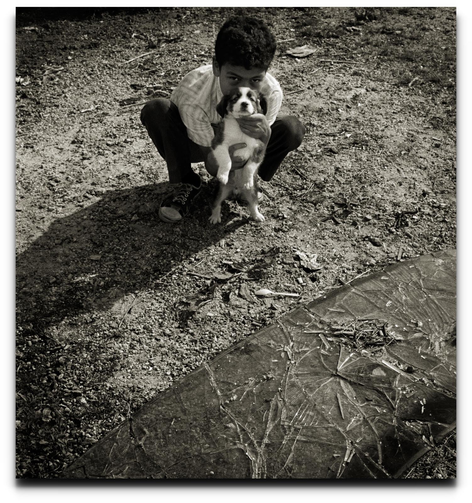 boydog01-003crop.jpg