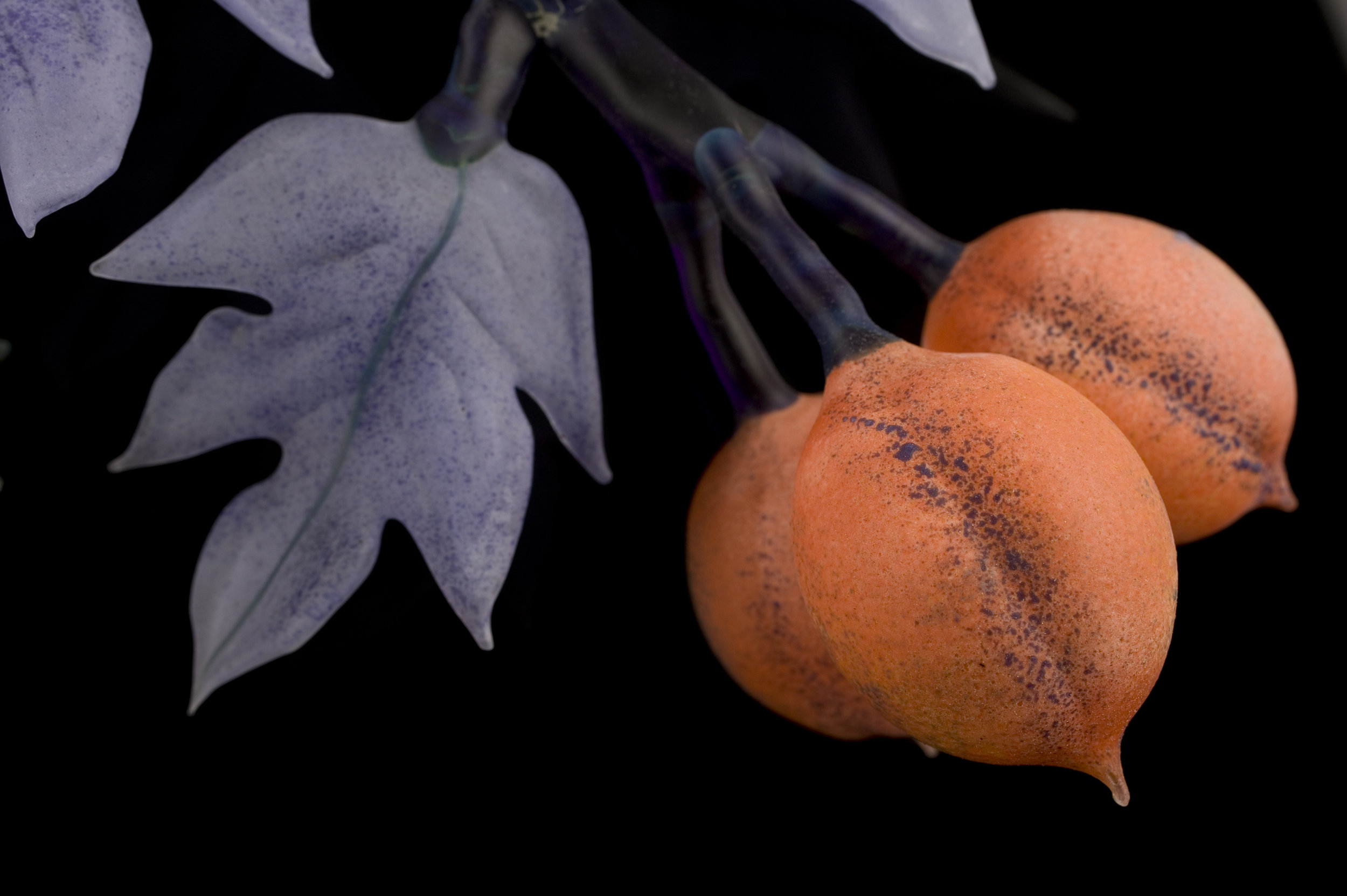 Apricots from Elsewhere detail 2.jpg
