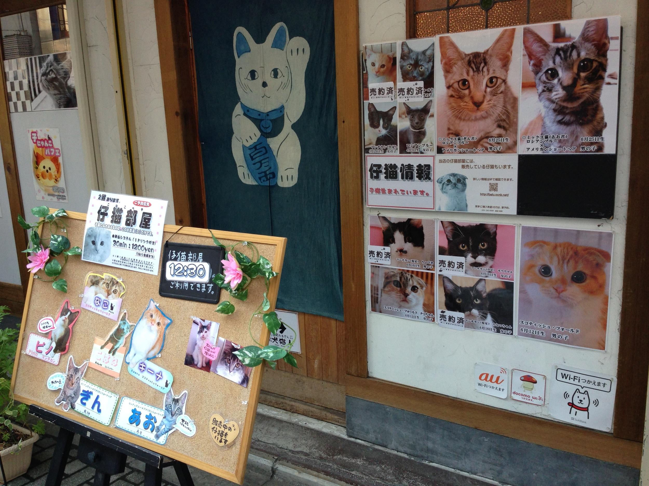 Cat café in Kyoto