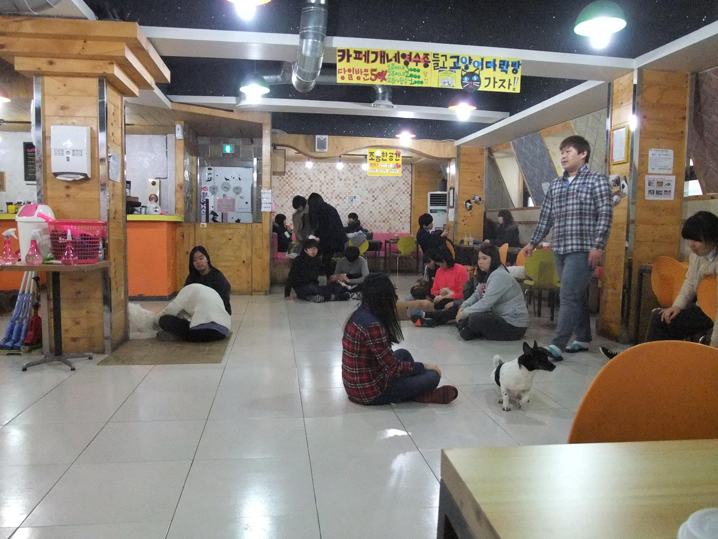 In the dog café in Seoul