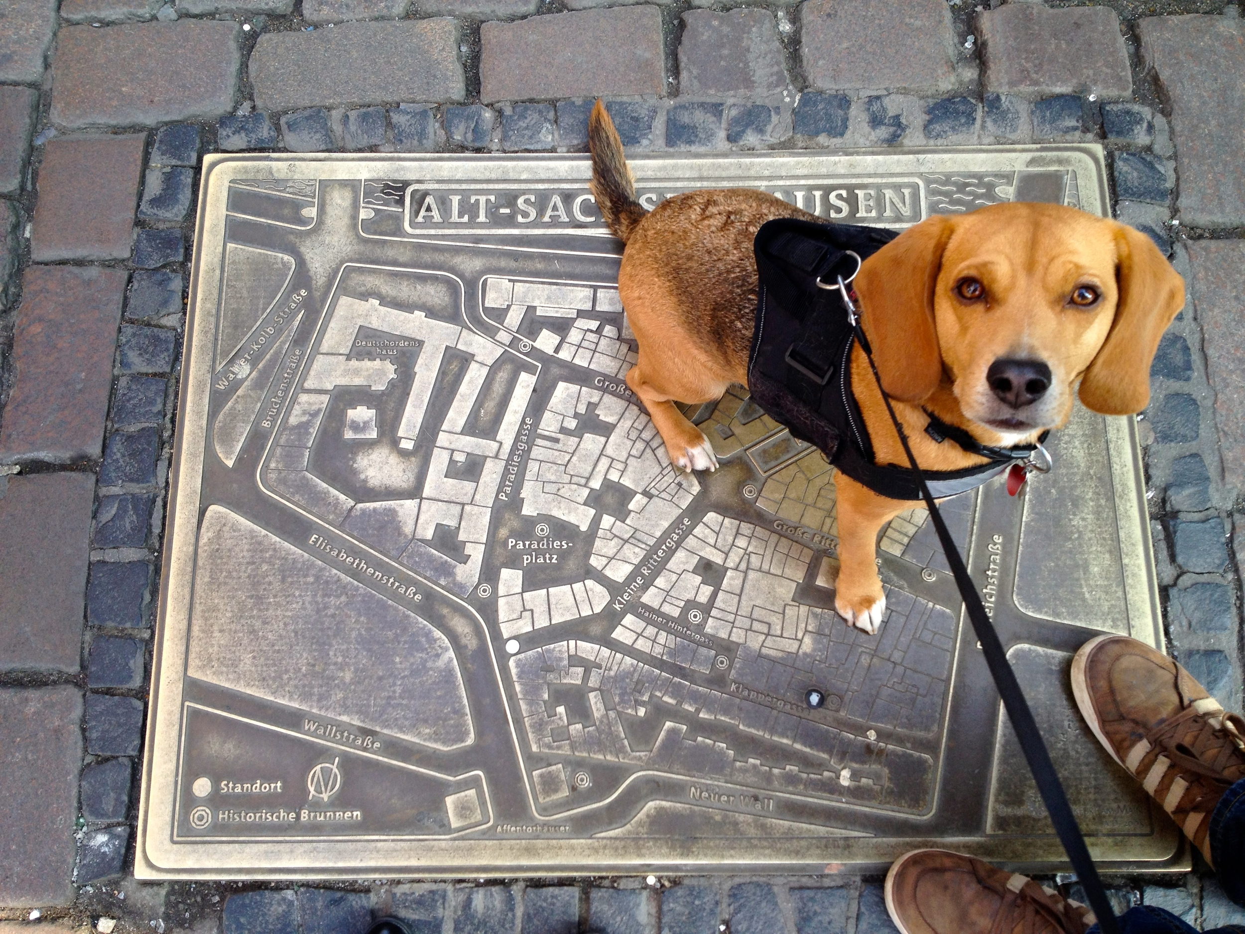 A map of  Sachsenhausen  in the street (with Leo sitting on it)