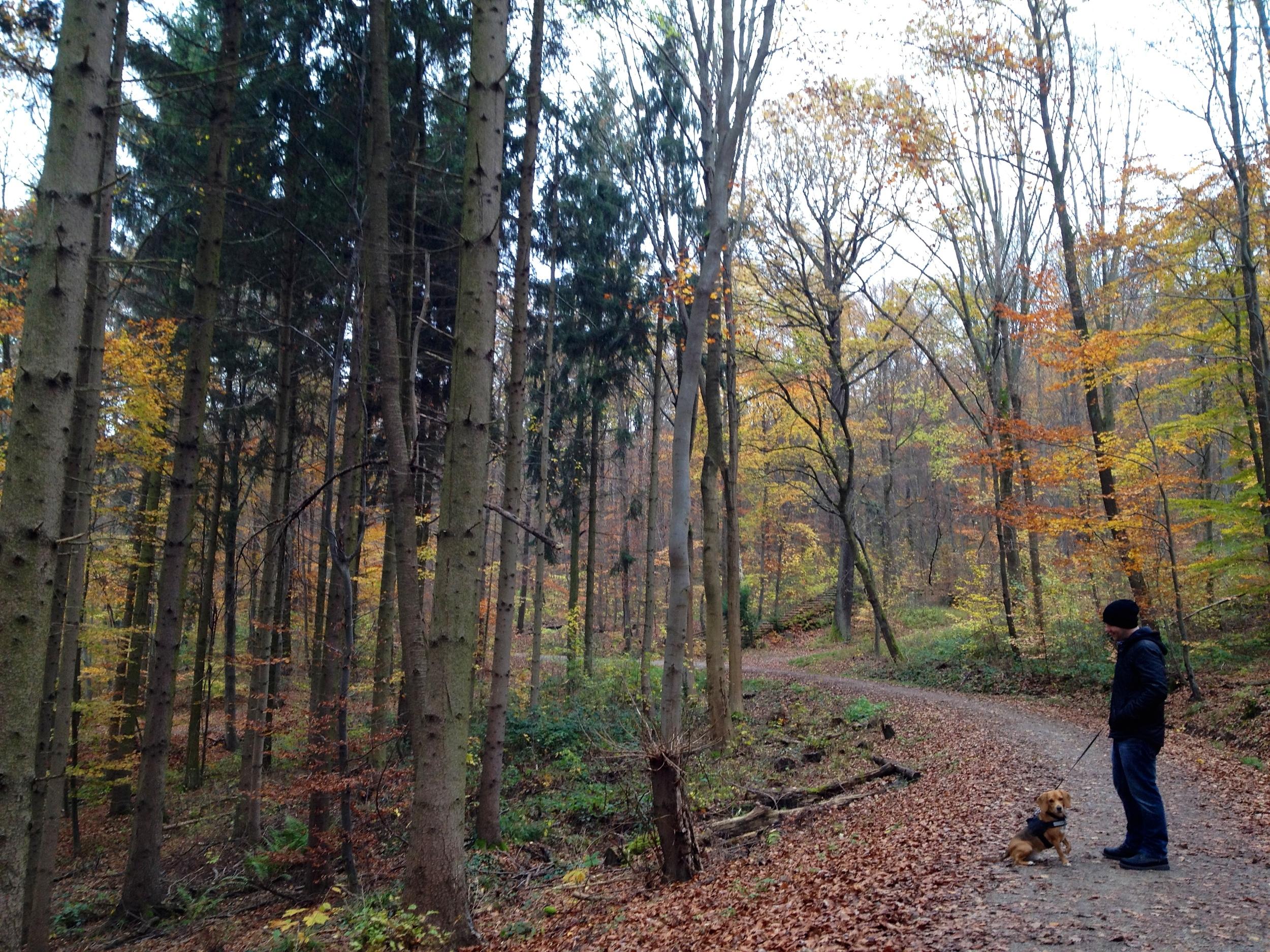 Autumn along the  Weinsteig  path