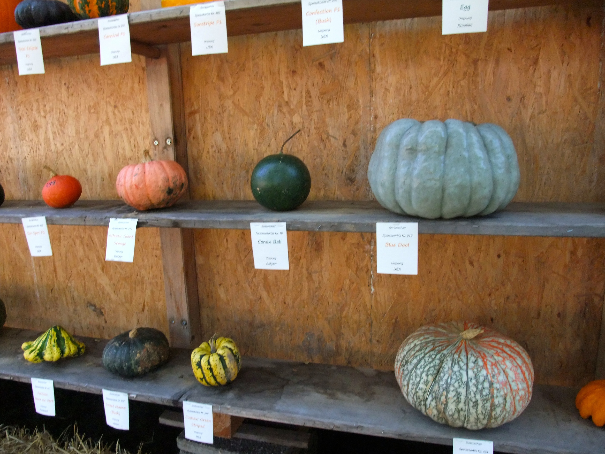 Pumpkins from all over the world on the pumpkin house