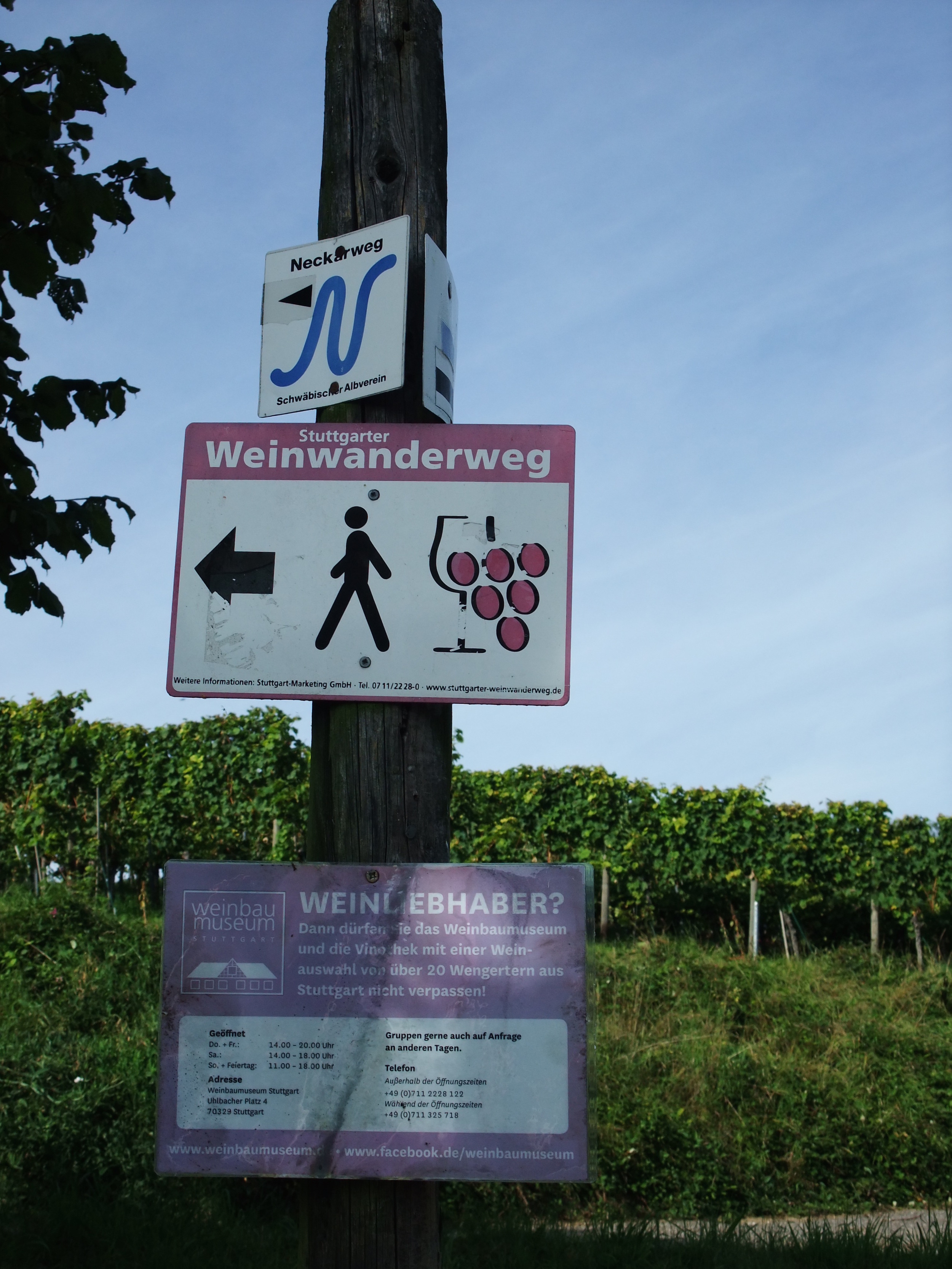 A sign directing walkers along the vineyards