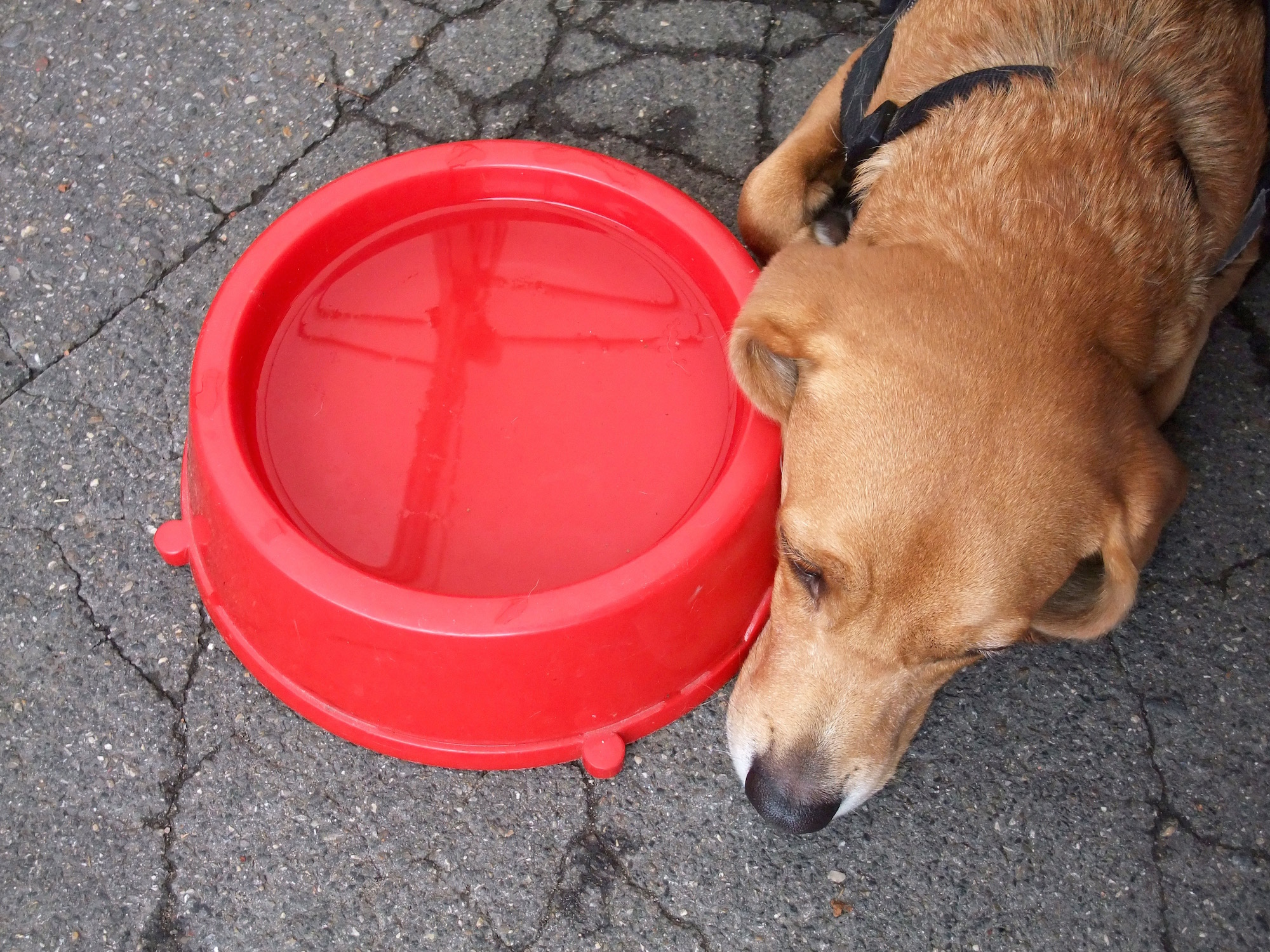 Leo with his water bowl from our nice waiter