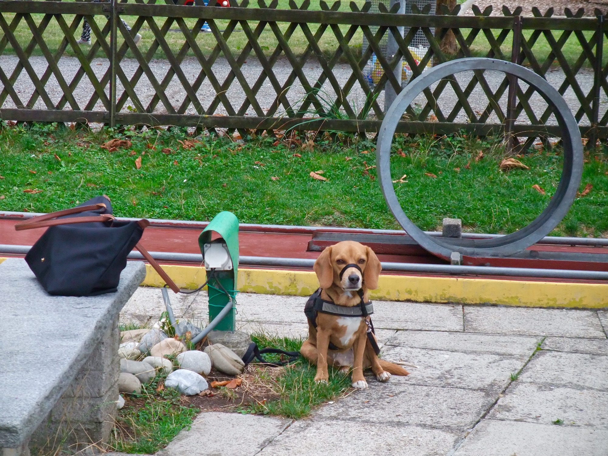 Leo watching my bag on the mini-golf course