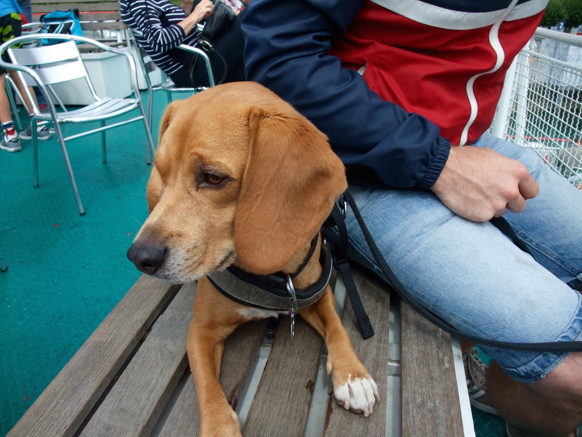 Leo on a ferry