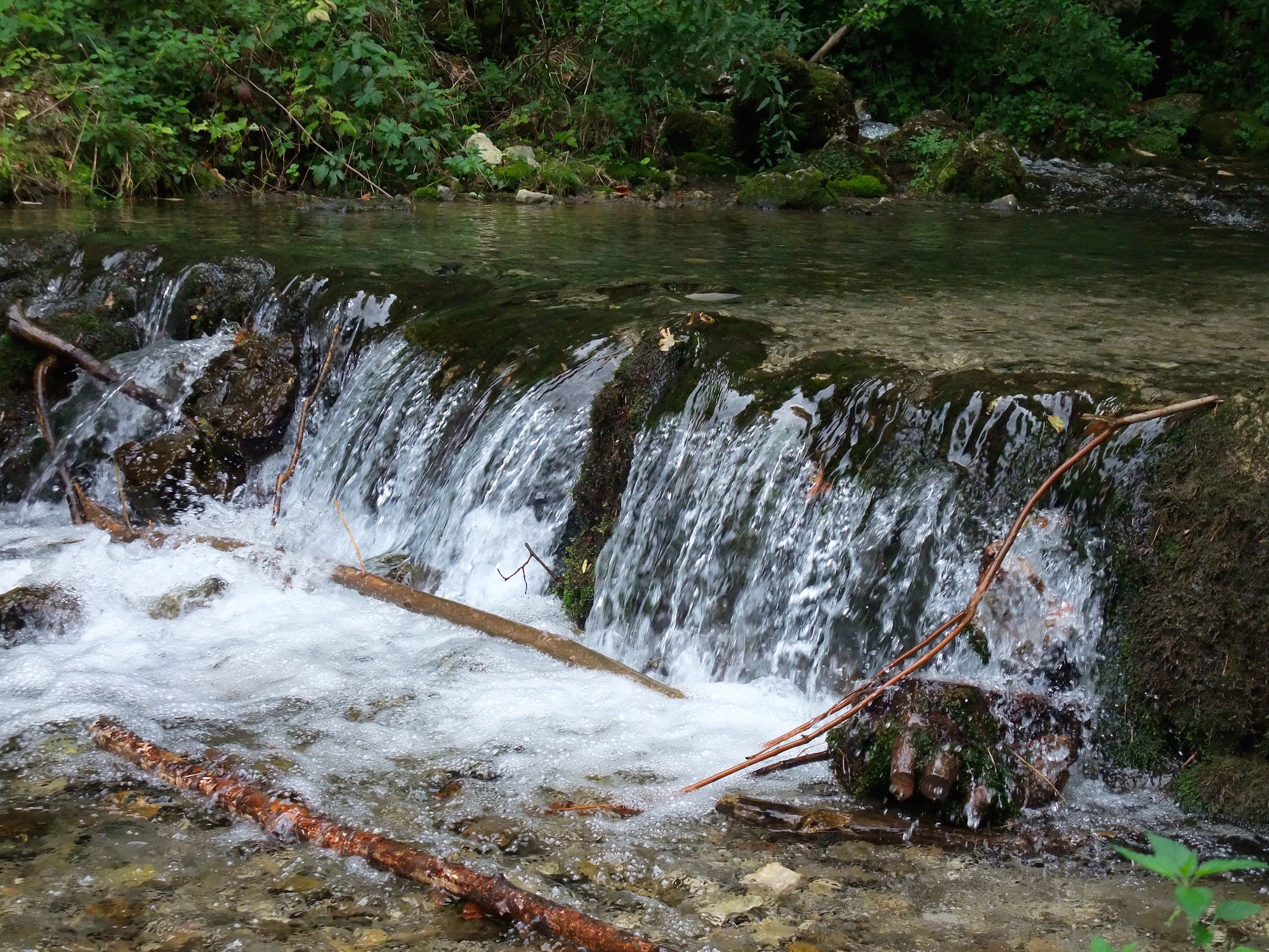 The mountain spring that feeds the trout farm
