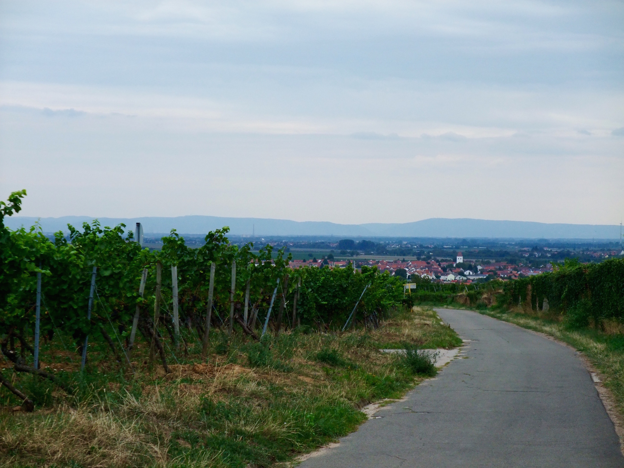 Our walk through the vineyards
