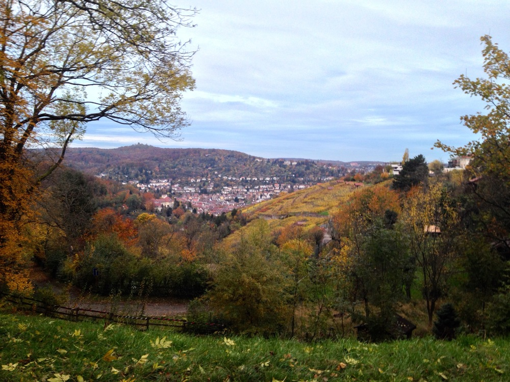 Stuttgart's vineyards along the  Weinsteige  in the fall