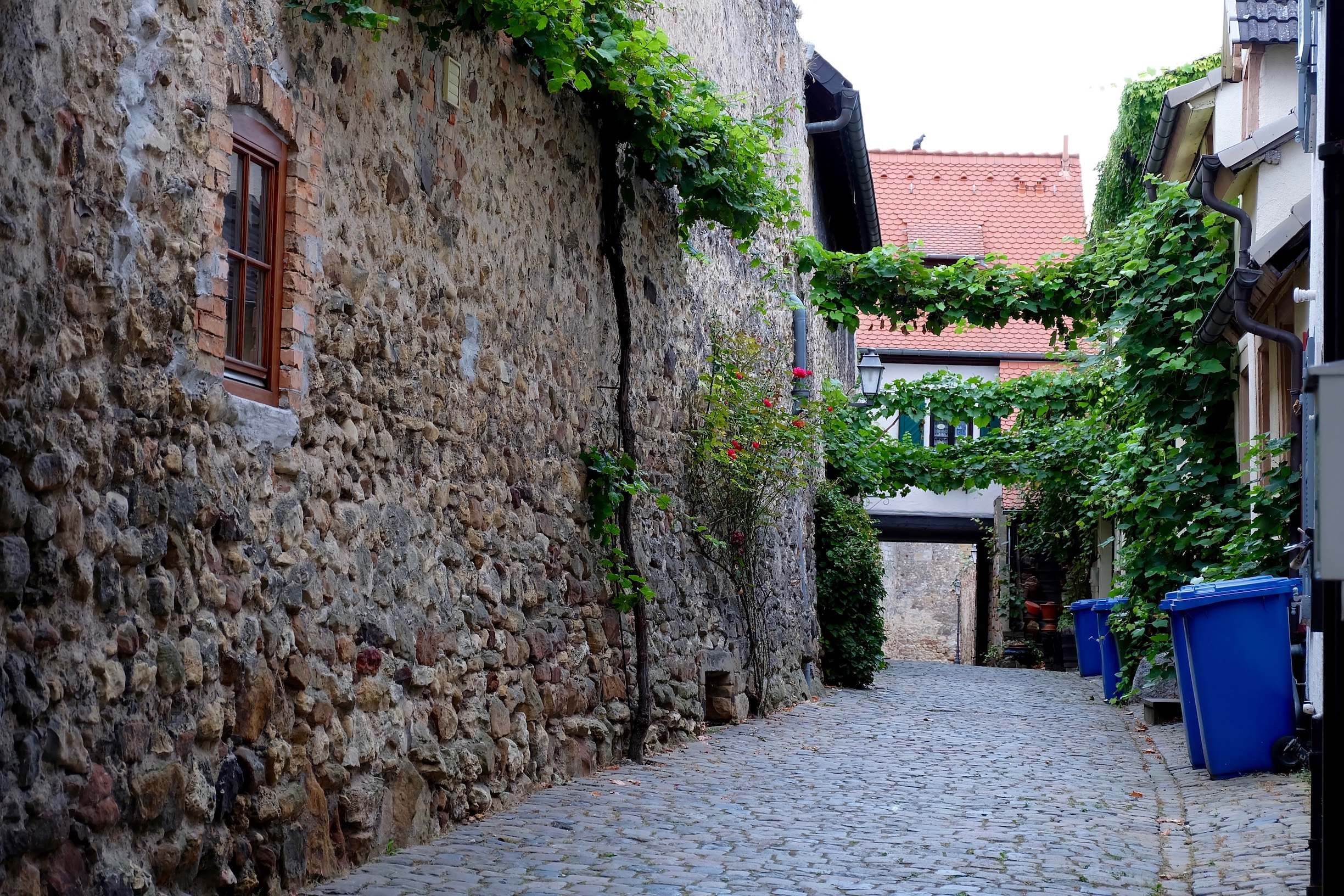 The tiny streets of  Freinsheim