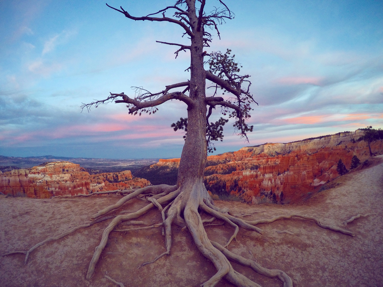 Bryce-Tree-web.jpg