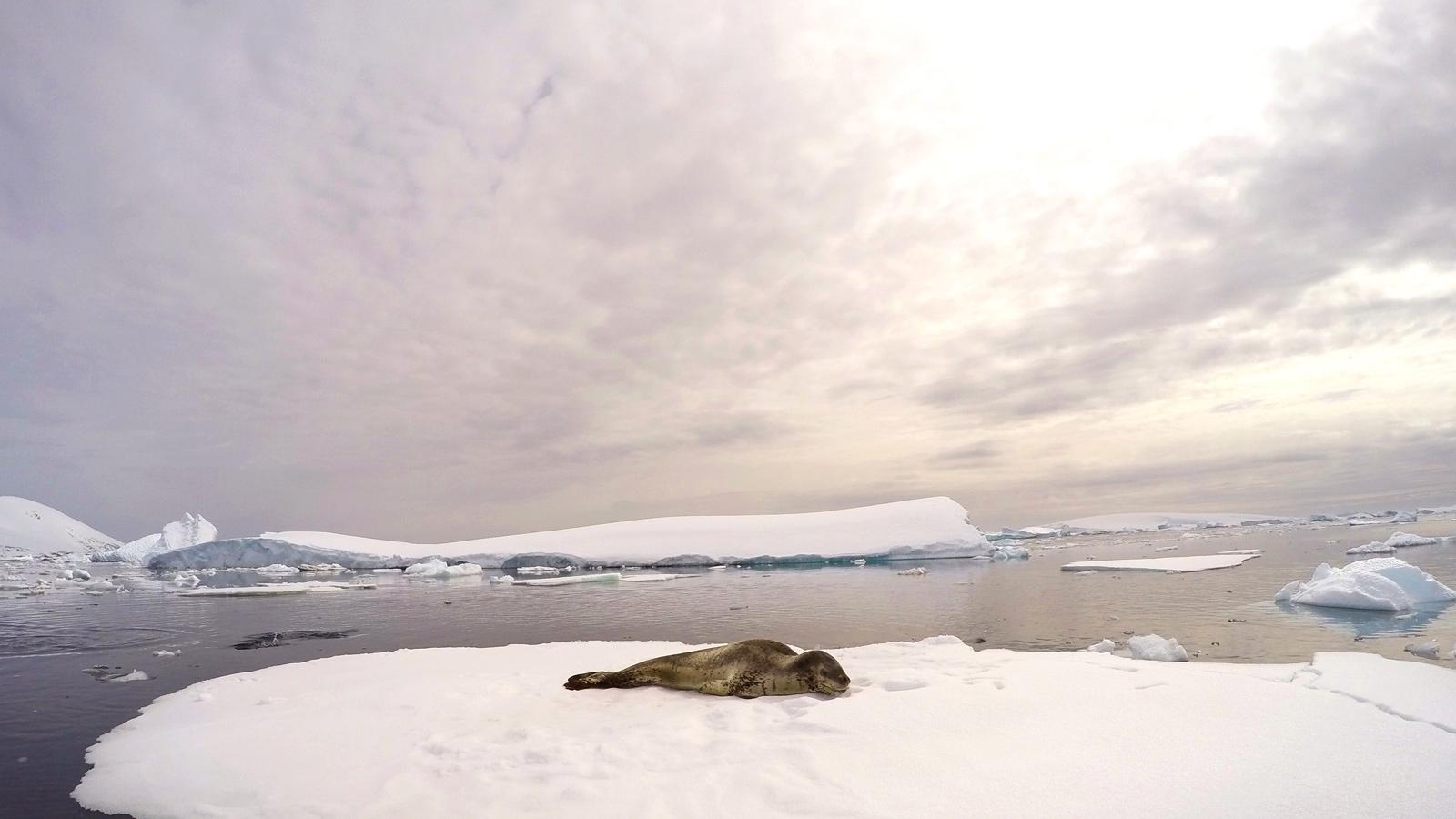 Leopard-Seal-Dusk-web.jpg