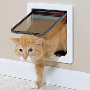 cat doors.png