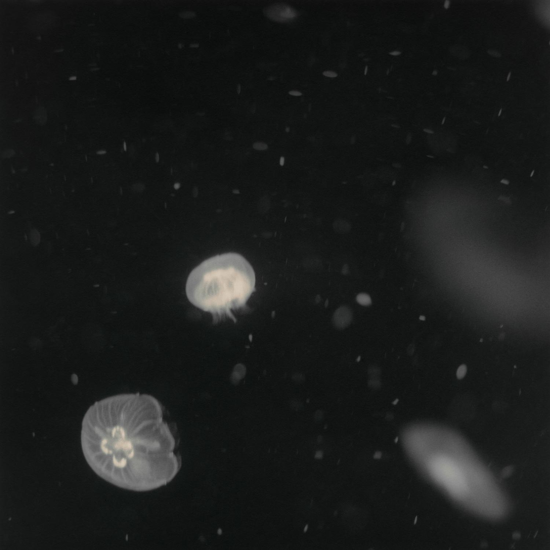 3.Cosmos.jpg