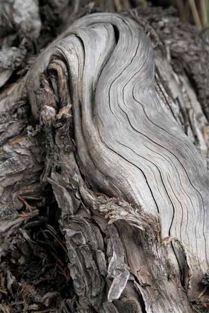 Wood Folds, (Southern Wyoming)