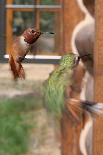 Feeding Frenzy, (Southern Wyoming)