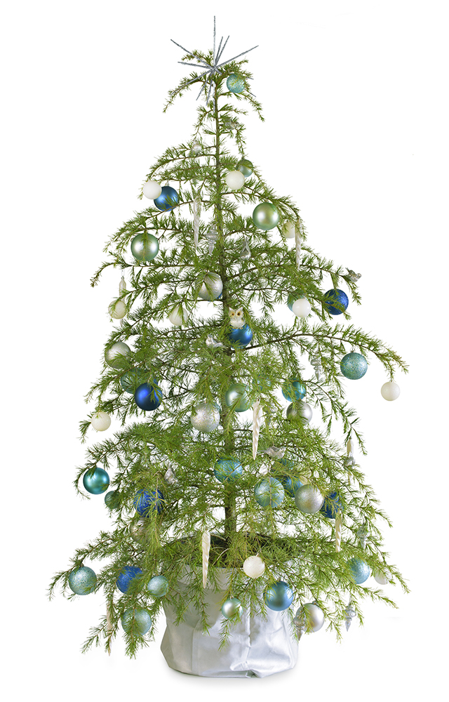 Winter Wonderland real potted Christmas tree