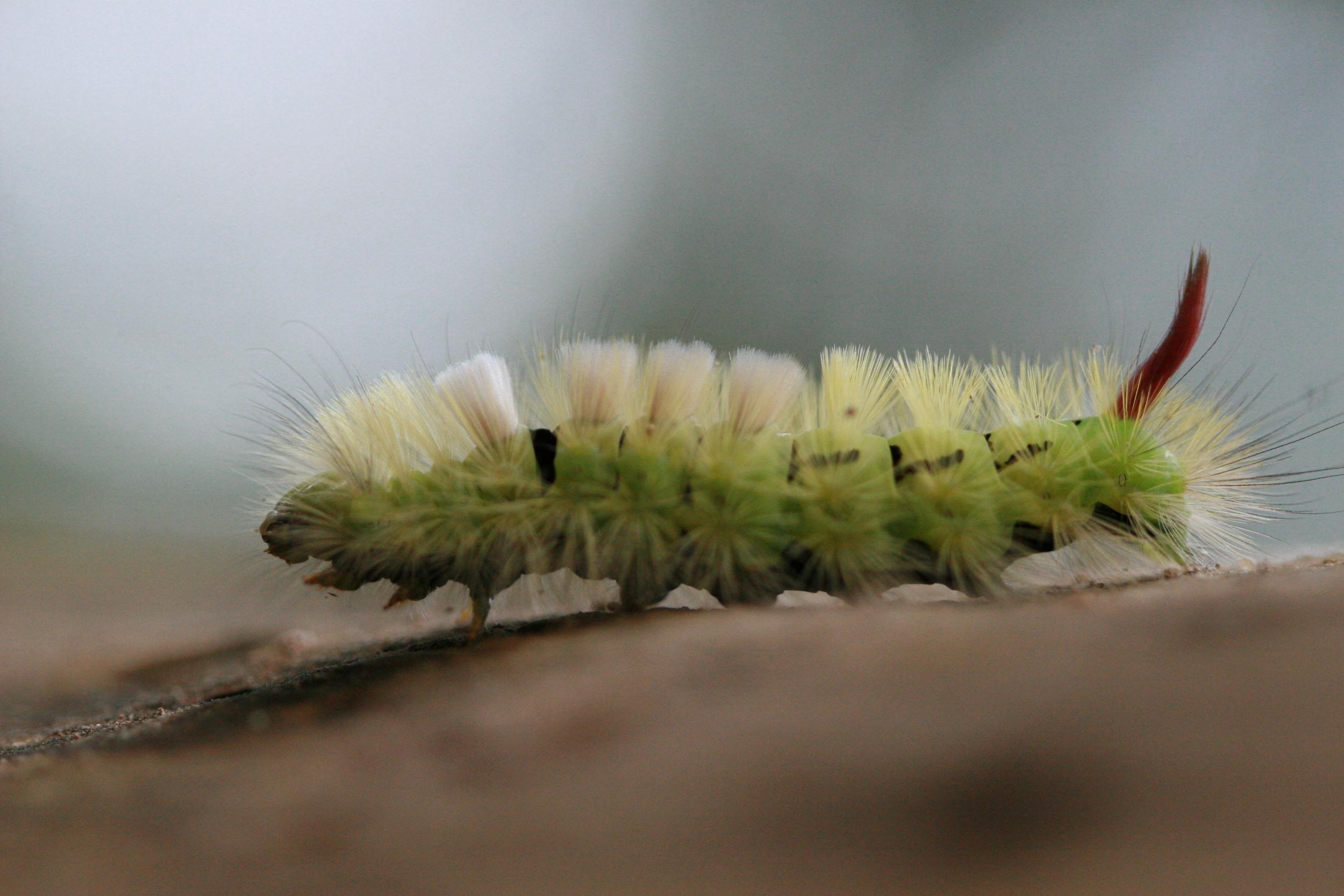 mothlarvae
