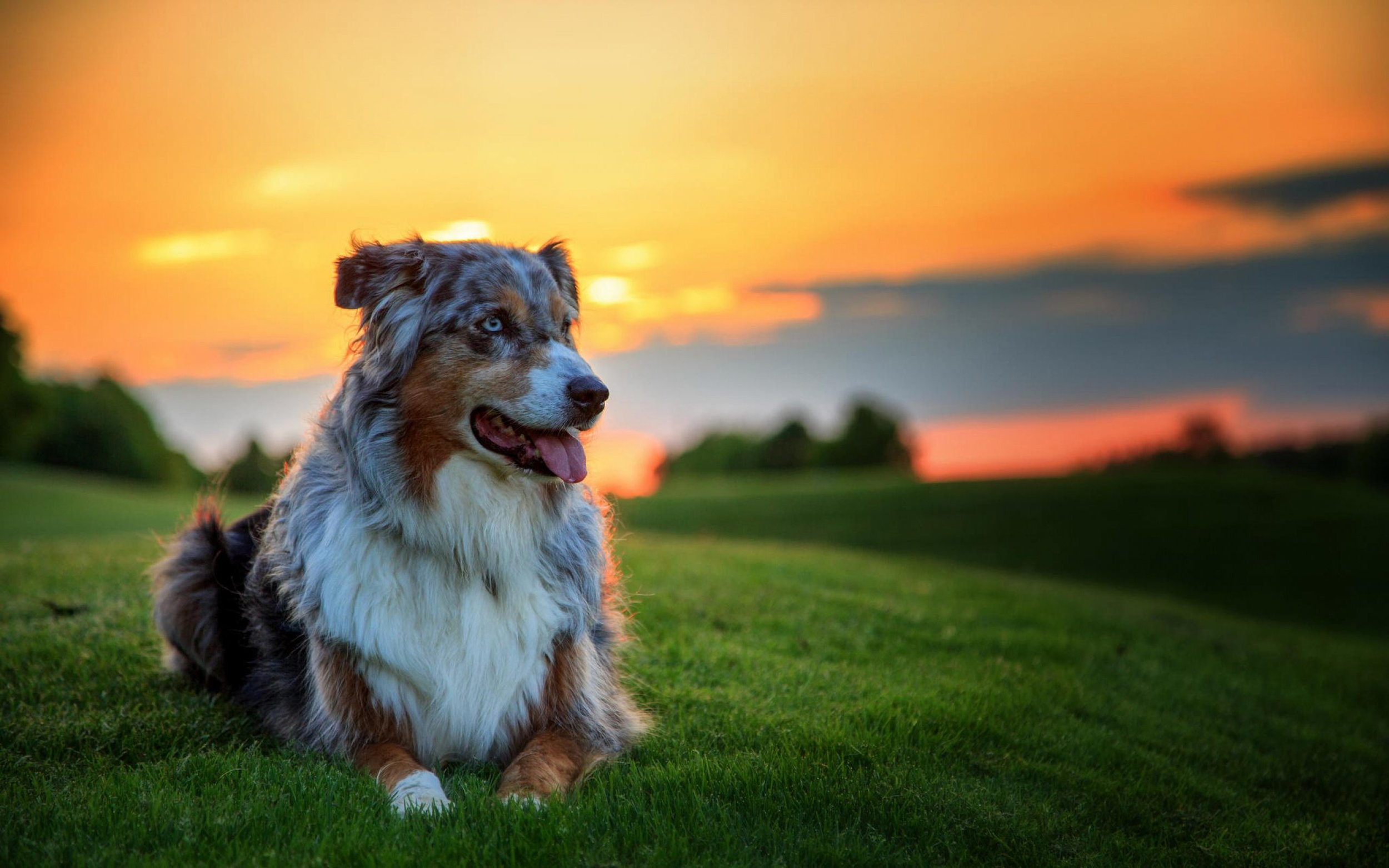69789063-dogs-wallpapers.jpg