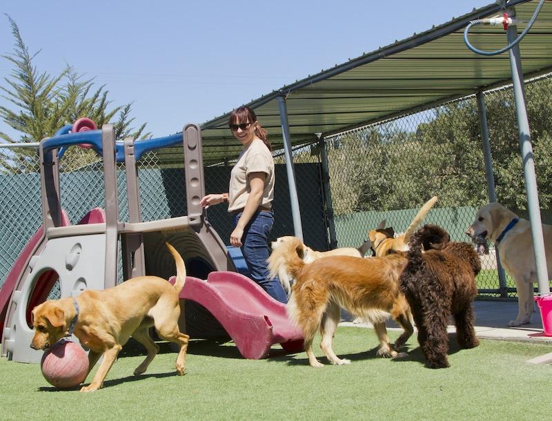 Dog daycare attendant observing dog behavior