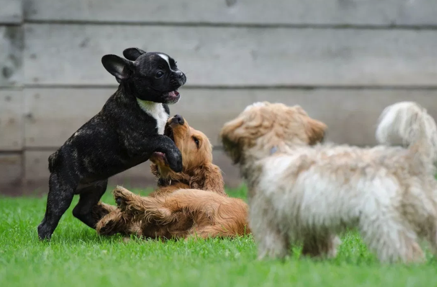 puppies_in_daycare_best_practice.png
