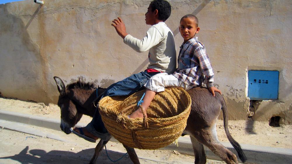 Boys on mule.jpg