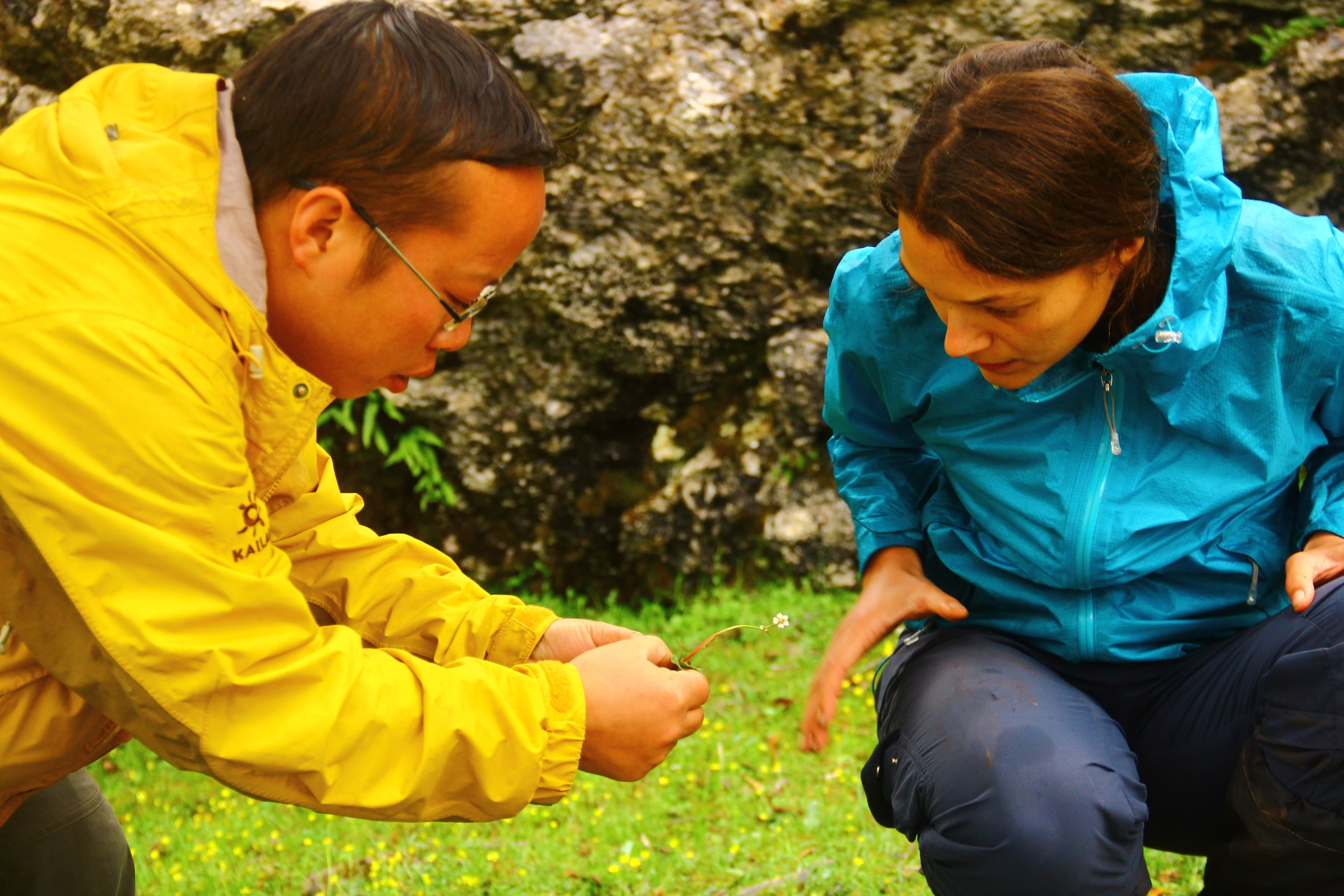 Dr. Wu and me examining  Micranthes pallida .