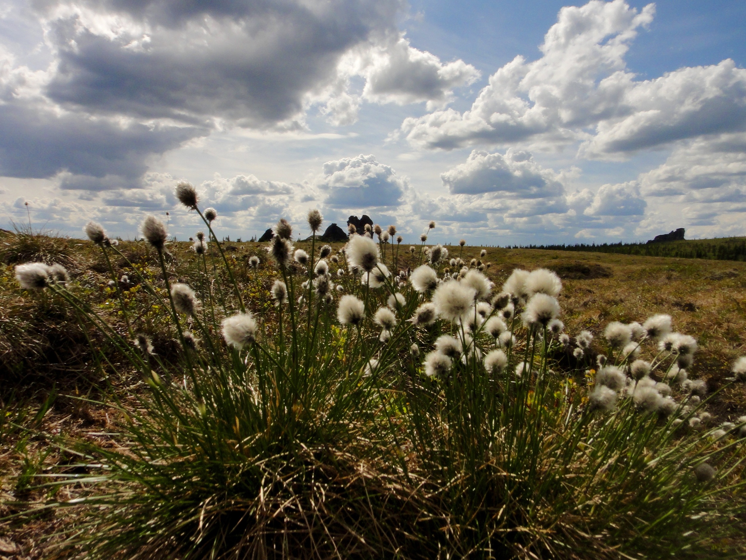 Cotton grass in foreground, Granite Tors in Background, Alaskan glory everywhere.