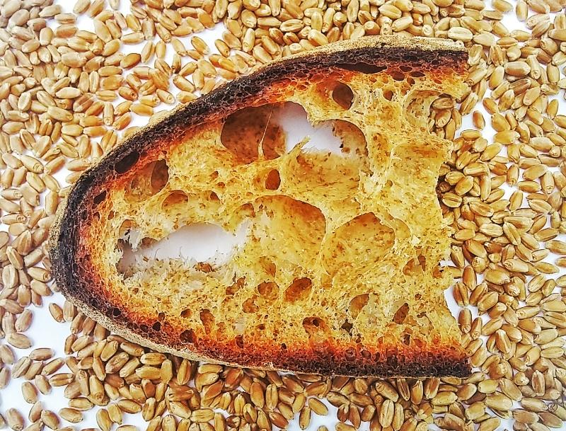 Methow Wheat
