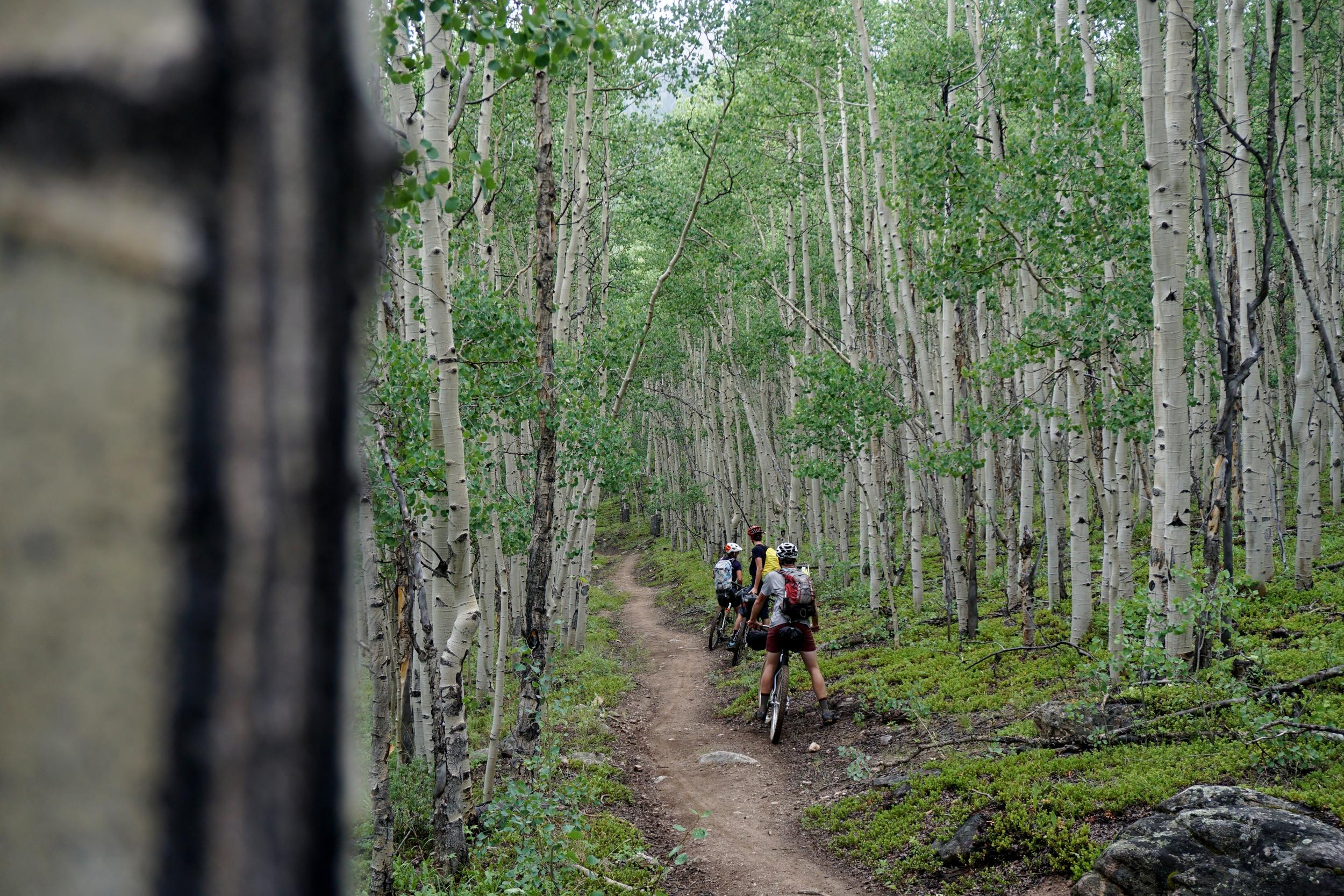 Sklar Colorado Trail (124).JPG